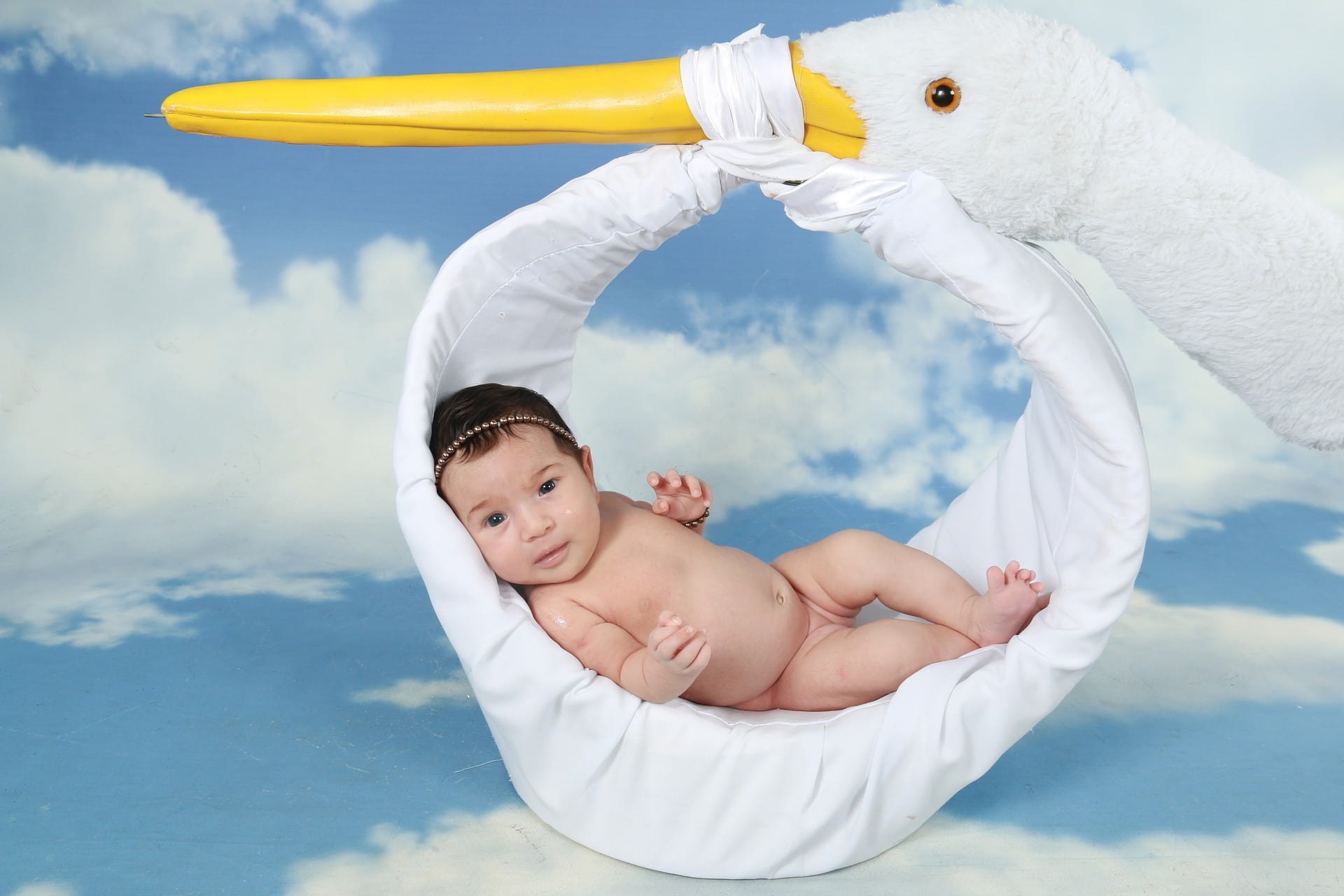 stork-1584755_1920